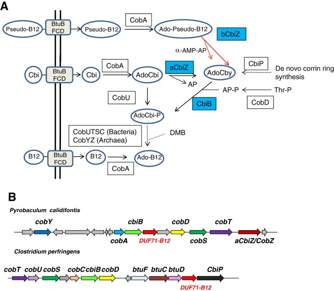 Comparative genomic analysis of the DUF71/COG2102 family predicts
