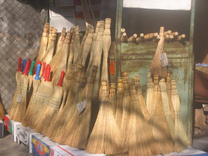 Plants traditionally used to make brooms in several European