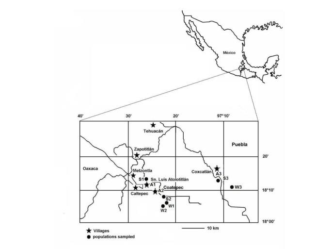 Landscape management and domestication of Stenocereus