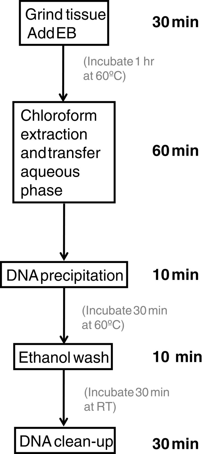 A high throughput DNA extraction method with high yield and