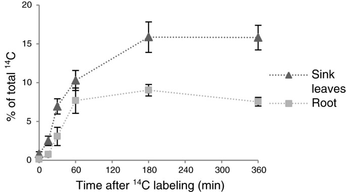 A device for single leaf labelling with CO2 isotopes to study ...