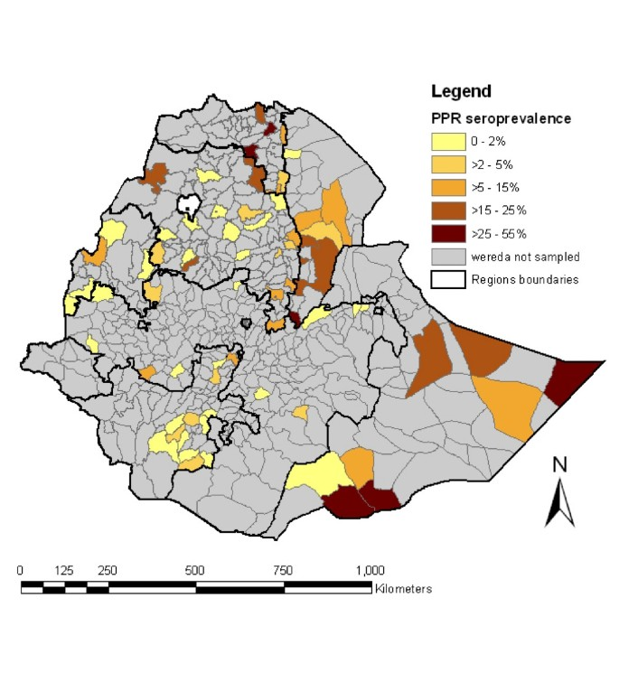 Peste des Petits Ruminants (PPR) in Ethiopia: Analysis of a