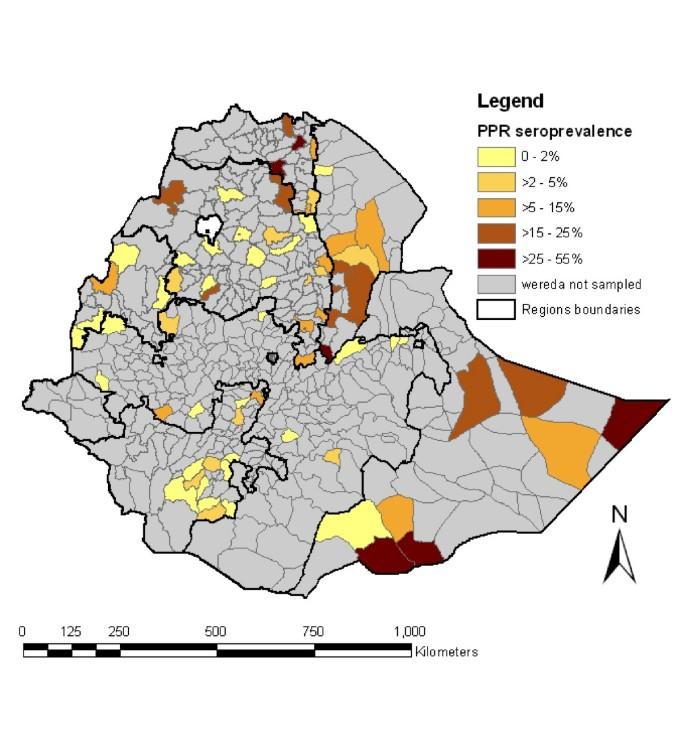 Peste des Petits Ruminants (PPR) in Ethiopia: Analysis of a