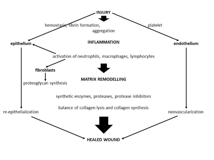 Wound healing after radiation therapy: Review of the