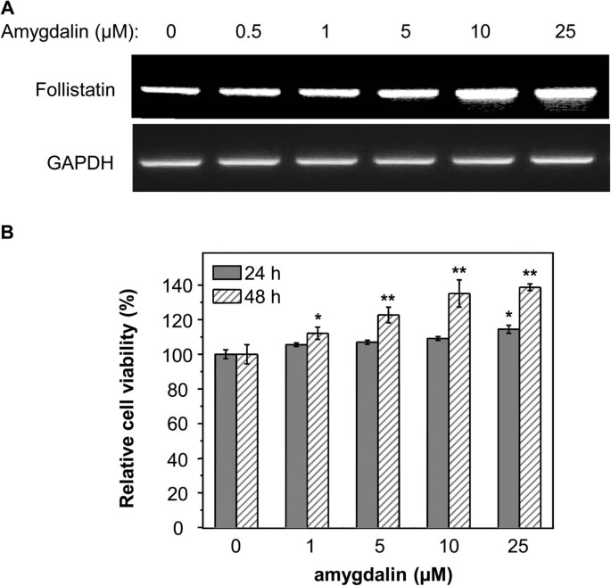 Amygdalin isolated from Semen Persicae ( Tao Ren ) extracts induces