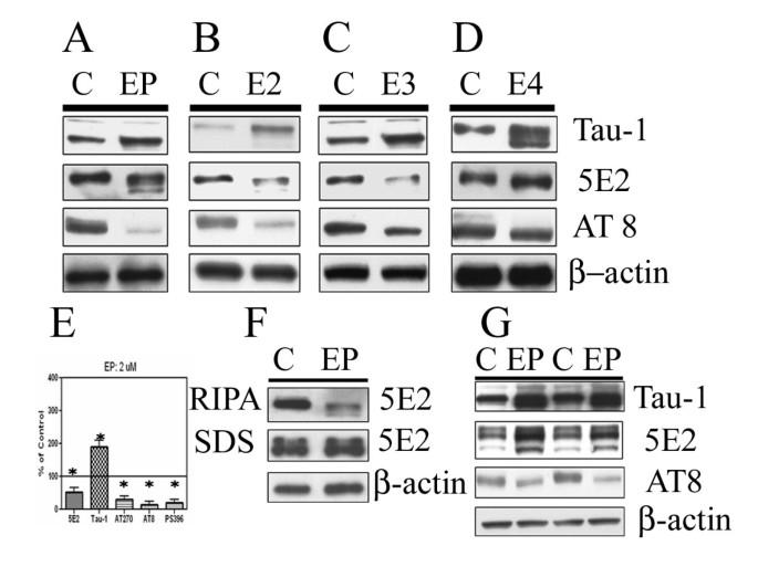 Apolipoprotein E decreases tau kinases and phospho-tau