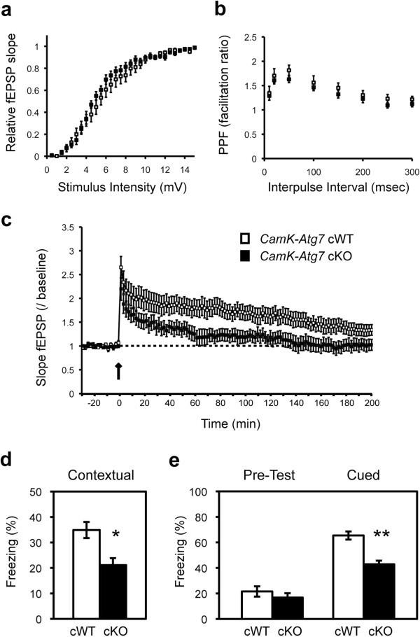 Macroautophagy deficiency mediates age-dependent