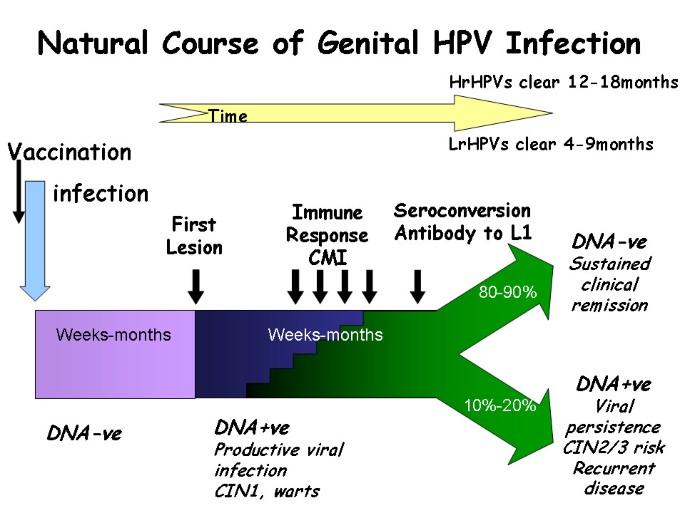 rău pentru a curăța corpul de paraziți hpv virus definition