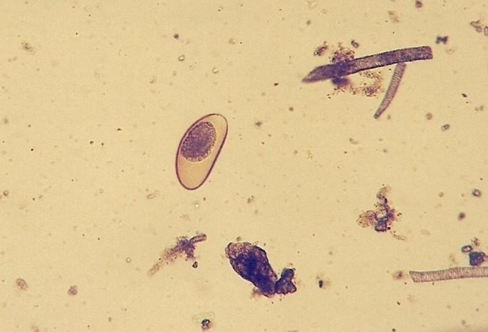 Parasites in pet reptiles | Acta Veterinaria Scandinavica