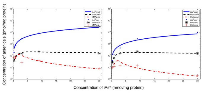 Mathematical model of uptake and metabolism of arsenic(III) in human
