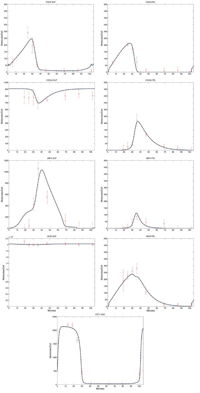 A quantitative model of the initiation of DNA replication in