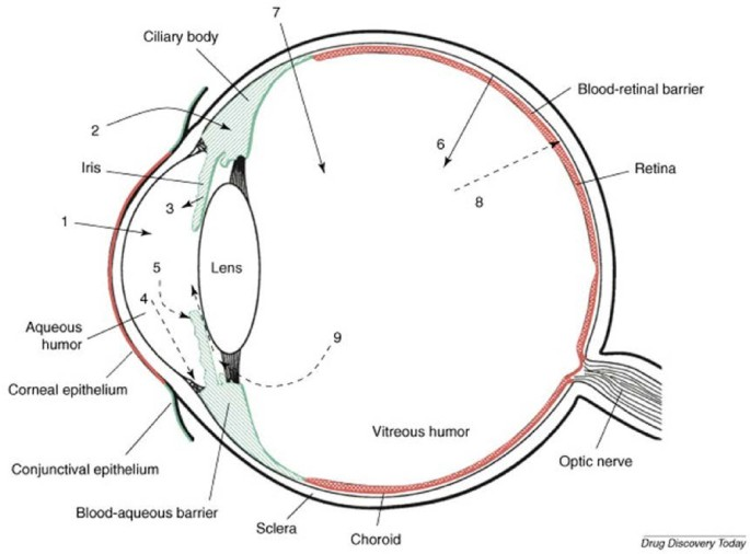 Strategies for ocular siRNA delivery: Potential and ... on