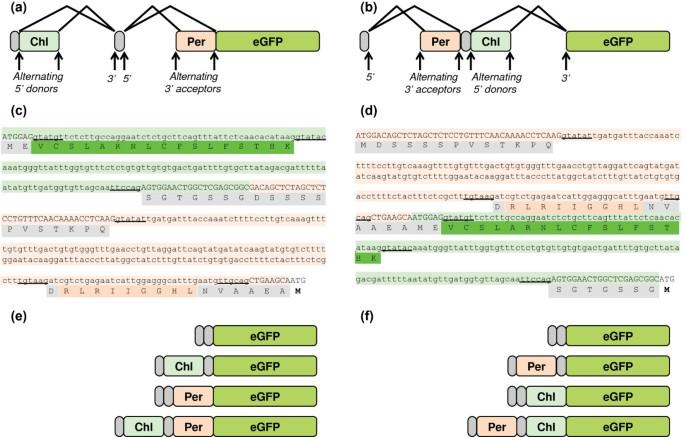 Targeting a heterologous protein to multiple plant organelles via ...