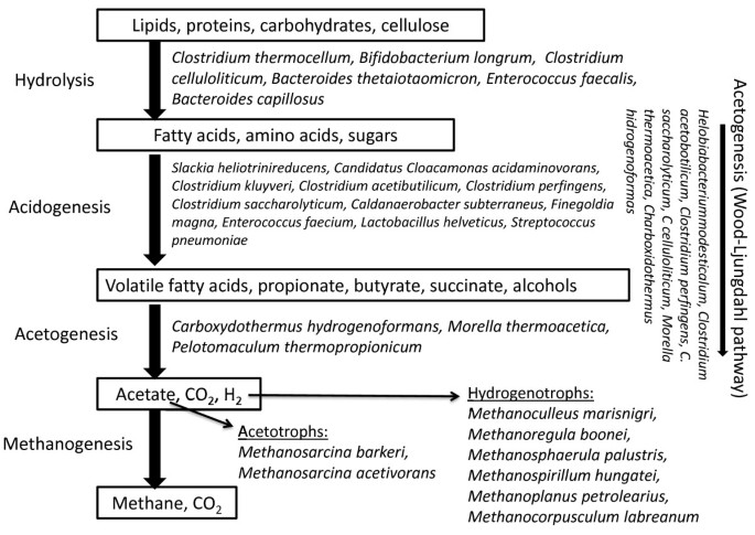 Characterization of a biogas-producing microbial community