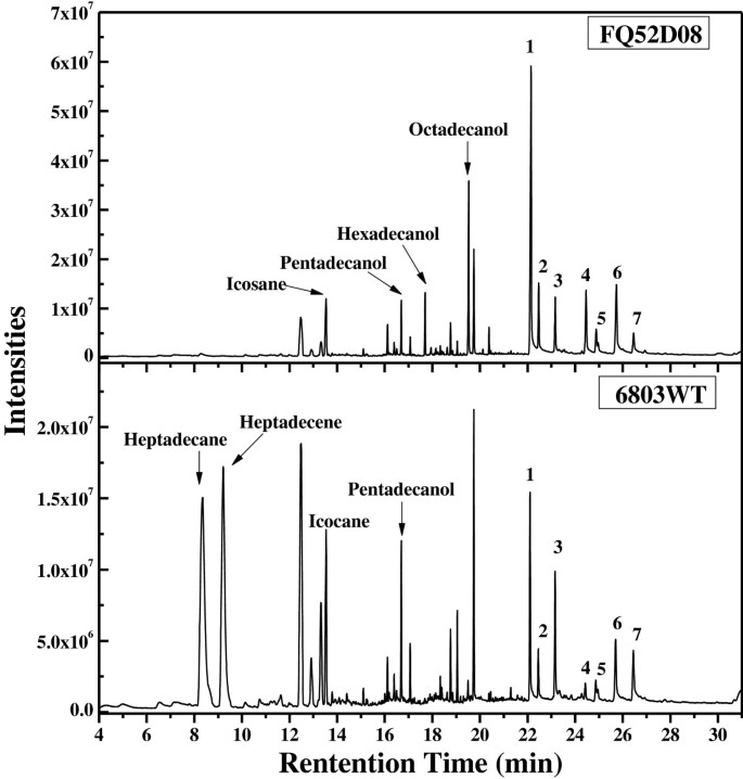 Improved production of fatty alcohols in cyanobacteria by
