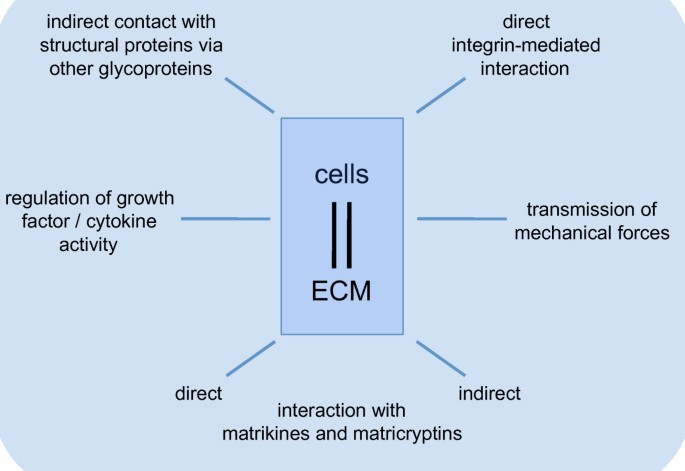 Cell-matrix interactions in dermal repair and scarring