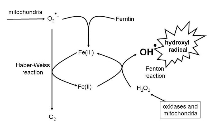 Iron behaving badly: inappropriate iron chelation as a major