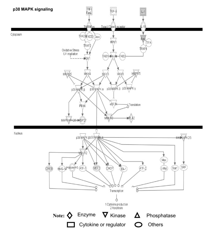 Signaling pathway networks mined from human pituitary