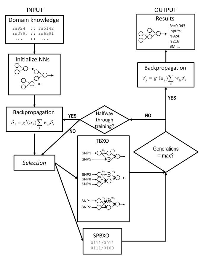 ATHENA: A knowledge-based hybrid backpropagation-grammatical
