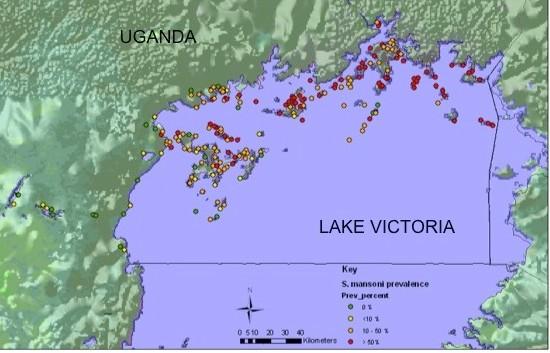schistosomiasis uganda hasnyálmirigyrákos étel