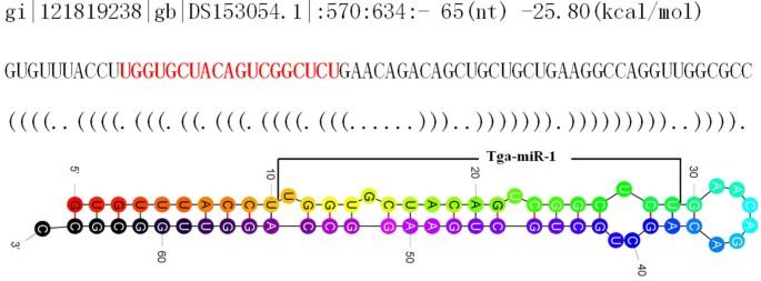 Global characterization of microRNAs in Trichomonas gallinae