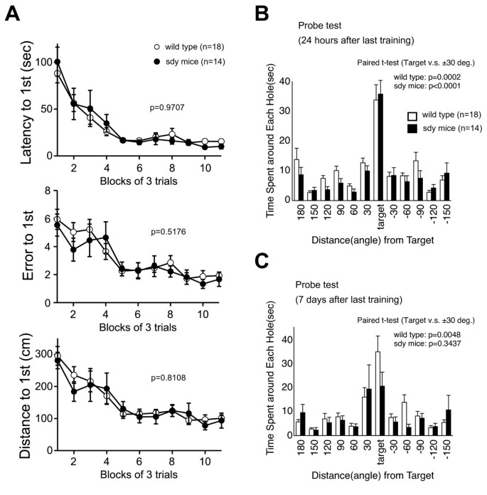 Impaired long-term memory retention and working memory in sdy mutant