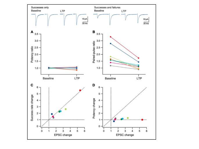 Expression of NMDA receptor-dependent LTP