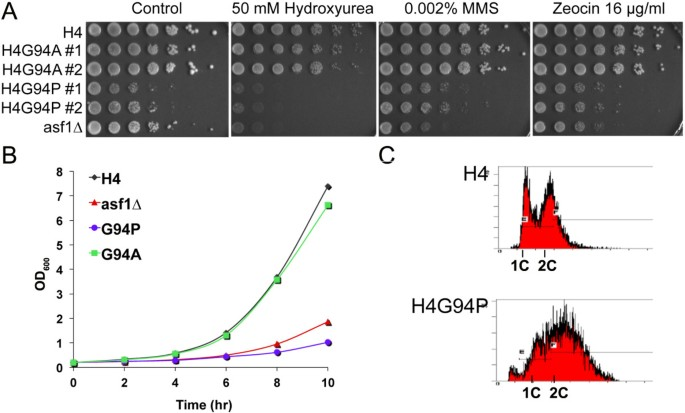 The conformational flexibility of the C-terminus of histone H4