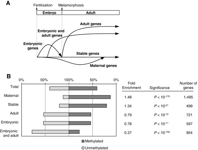 Enigmatic Chemical Tag Is Altered In >> Identical Sets Of Methylated And Nonmethylated Genes In