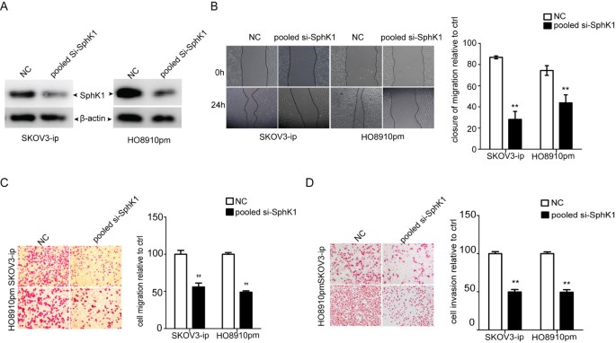 MiR-124 inhibits the migration and invasion of ovarian cancer cells