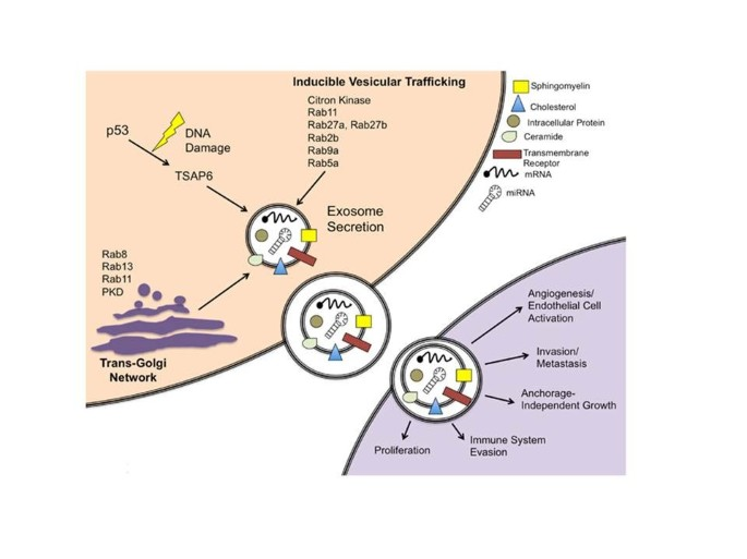 Exosomes: an overview of biogenesis, composition and role in ovarian