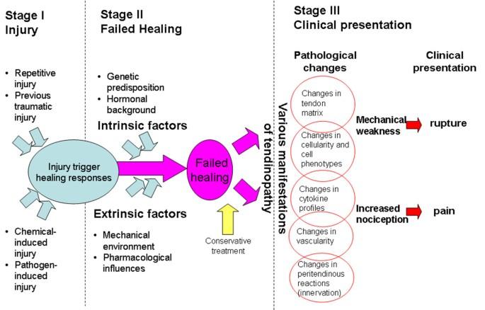 Teniasis patogenezis