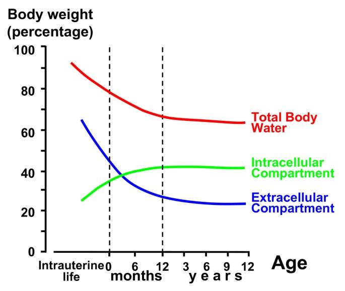 Body fluids and salt metabolism - Part I   Italian Journal of
