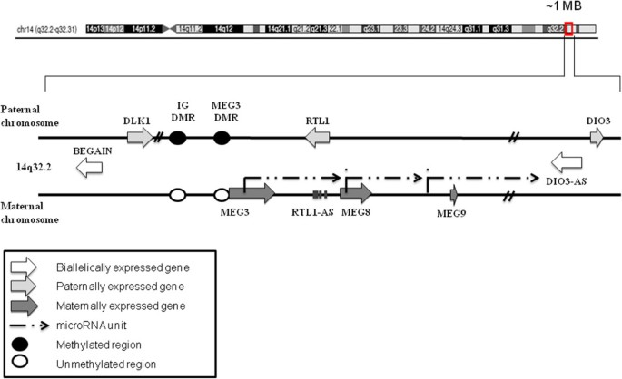 Concomitant downregulation of the imprinted genes DLK1 and MEG3 at