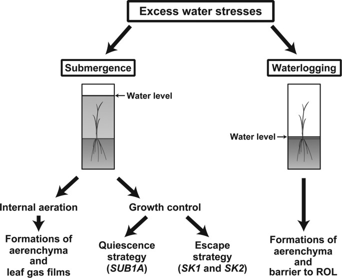 Mechanisms for coping with submergence and waterlogging in rice