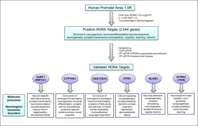 Genome-wide identification of transcriptional targets of