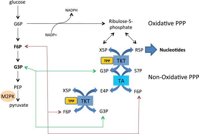 Linking vitamin B1 with cancer cell metabolism | Cancer & Metabolism