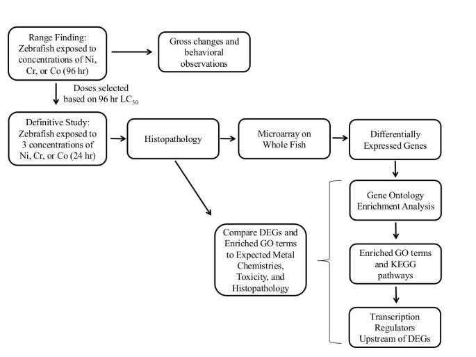 Whole adult organism transcriptional profiling of acute