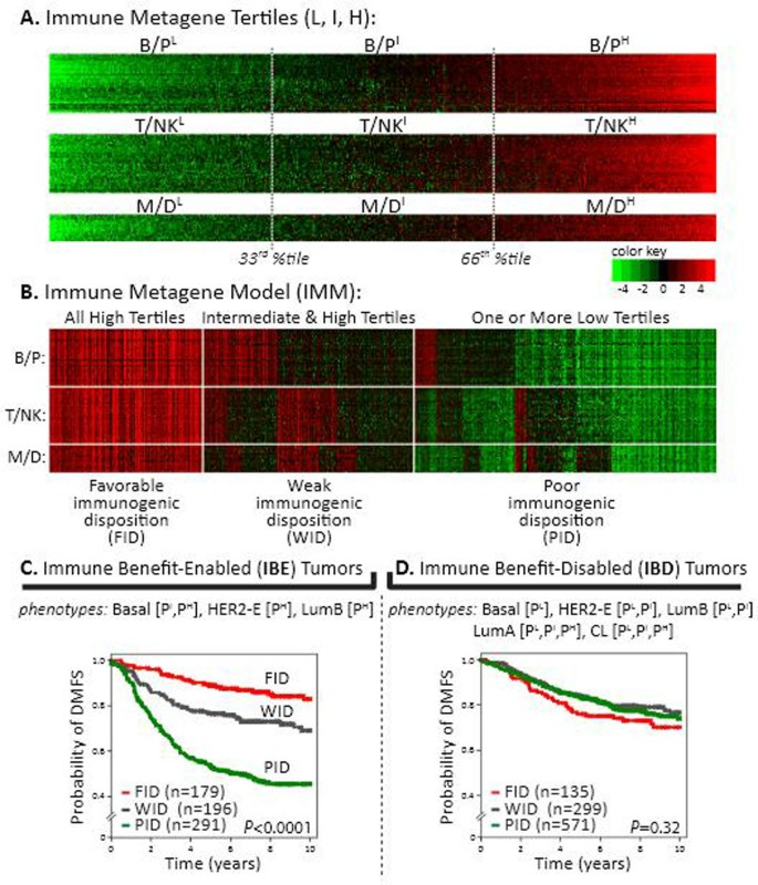 Immune gene signatures and tumor intrinsic markers delineate