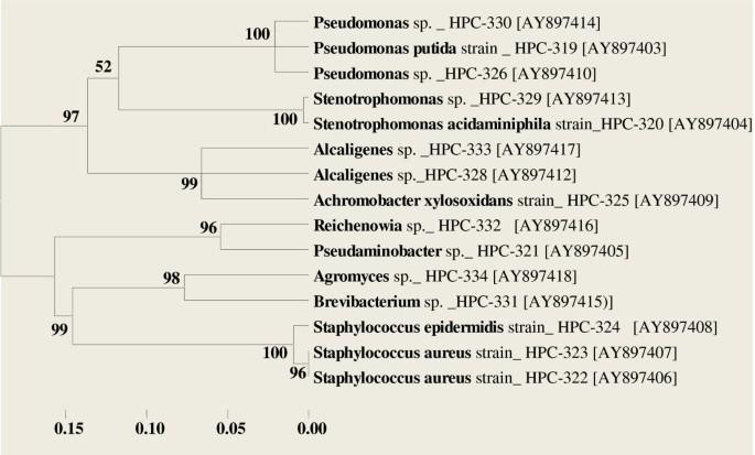 Molecular Characterization of camphor utilizing bacterial