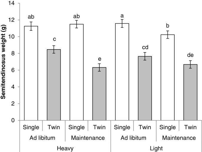 Muscle free amino acid profiles are related to differences