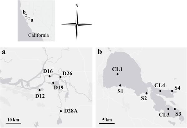 Identification of harmful cyanobacteria in the Sacramento