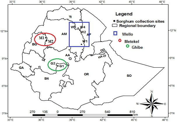 Analysis of in situ diversity and population structure in Ethiopian