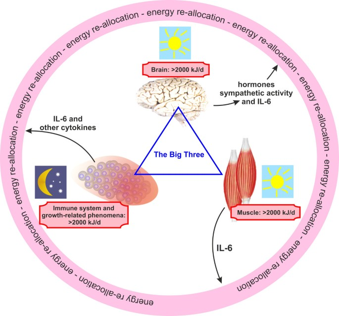 Interaction of the endocrine system with inflammation: a