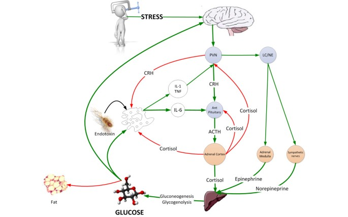 Stress hyperglycemia: an essential survival response