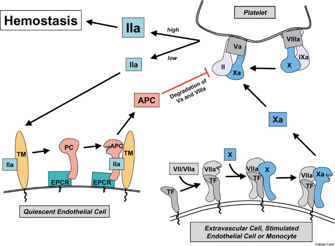 Science review: Role of coagulation protease cascades in sepsis