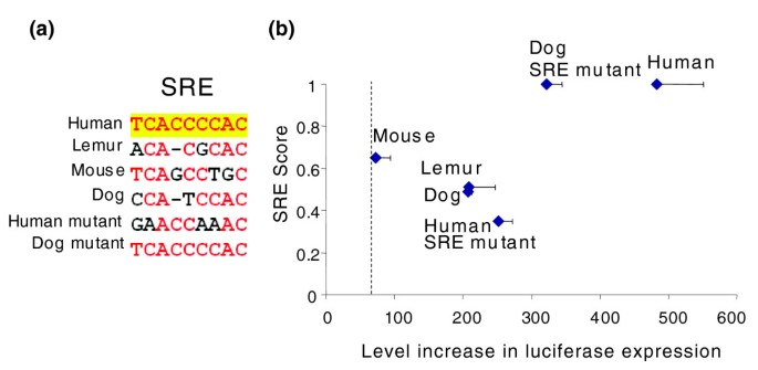 Primate-specific evolution of an LDLR enhancer | Genome