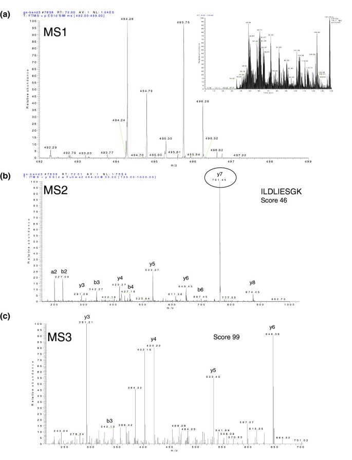 Identification Of 491 Proteins In The Tear Fluid Proteome Reveals A Large  Number Of Proteases And Protease Inhibitors | Genome Biology | Full Text