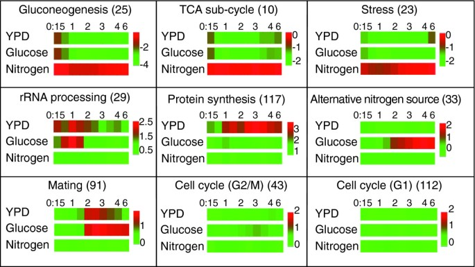 Spore germination in Saccharomyces cerevisiae : global gene