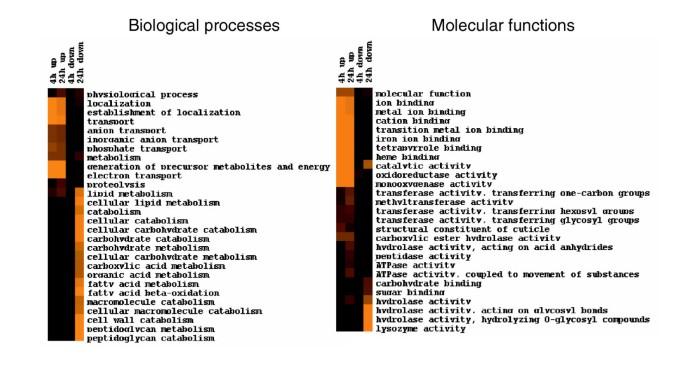 Toxicogenomic analysis of Caenorhabditis elegans reveals novel ...